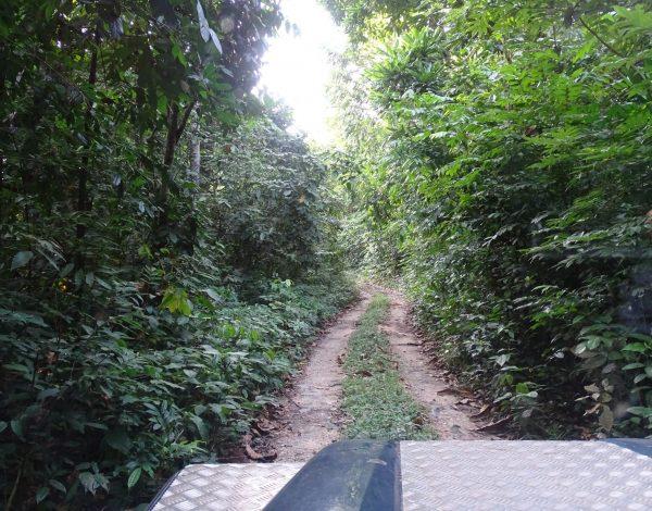 nr 44 _ Tarzan Area