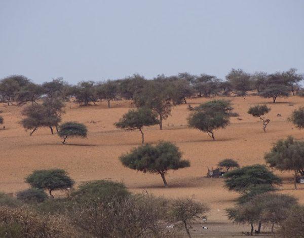nr 52 _ Mauretania – Nouakchott, Banc d'Arguin, was ist da los?