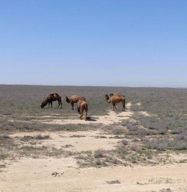nr 69 _ caspian sea to karakal desert
